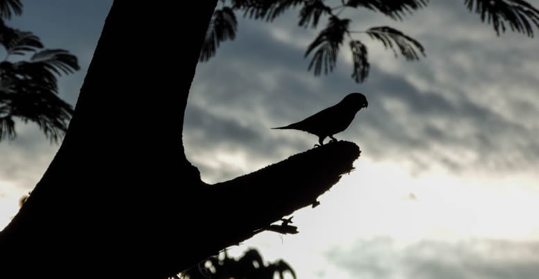 Parque Nacional Rincón de la Vieja, Costa Rica